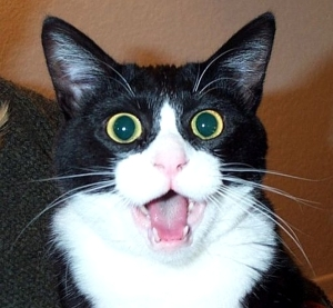 Shocked Cat Face